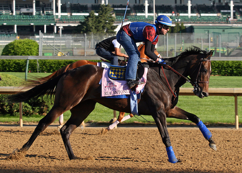 Ria Antonia gallops at Churchill on 4/26 (Photo: John C. Engelhardt)