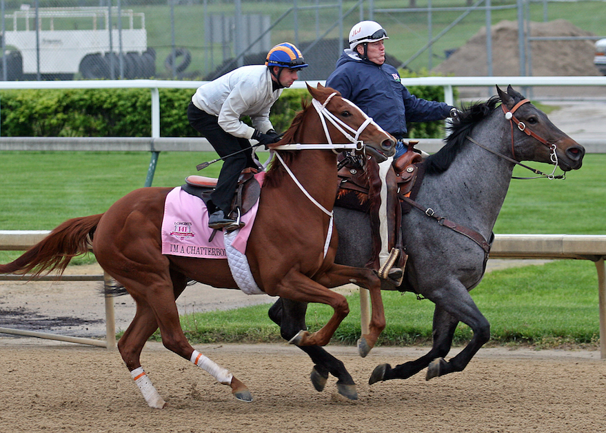 Trainer Larry Jones let's I'm A Chatterbox go. (Photo: John C. Engelhardt)
